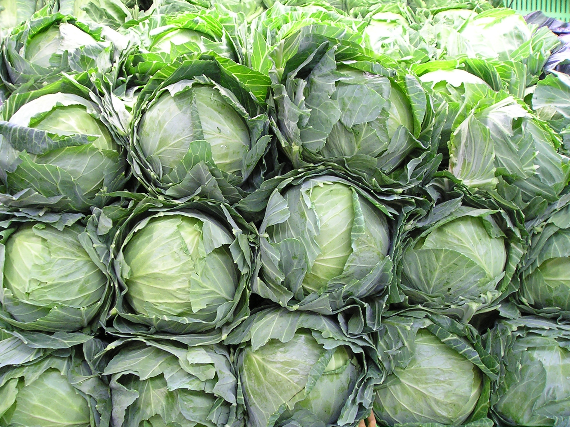 Crazy for cabbage purposeful nutrition healing with food