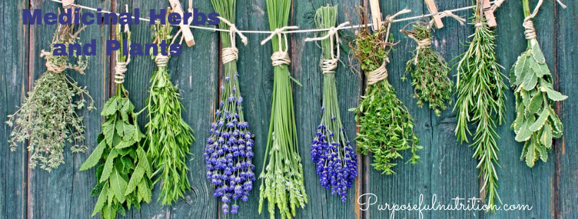 Drying and Preserving Medicinal Herbs and Plants